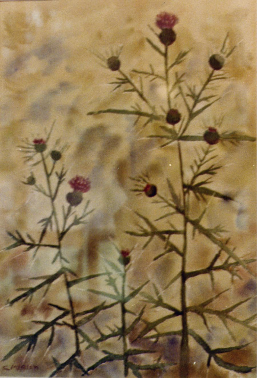 Thistles Watercolor